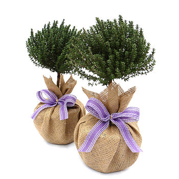 Mothers Day Pair Of Mini Stemmed Thyme