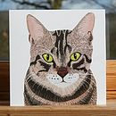 Cat Collection 'Tabby' Greeting Card