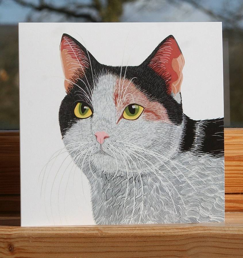 Cat Collection 'Smartie' Greeting Card