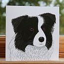 'Border Collie' Dog Card