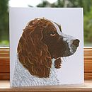 'Springer Spaniel' Dog Card
