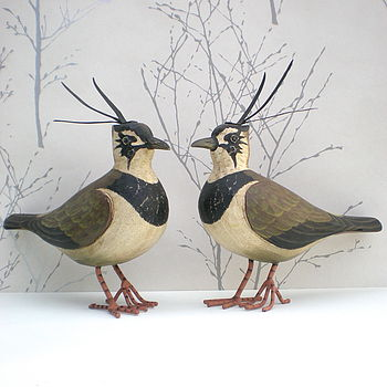 Decorative Lapwing Bird