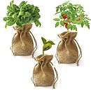 Sunflower Jute Bag Grow Set