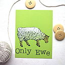 Farmyard Sheep Postcard
