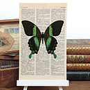 Peacock Butterfly Antique Book Page Print