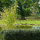 Artificial boxwood hedge for your garden