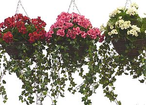 Artificial Geranium Hanging Basket - flower baskets & boxes
