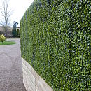 Boxwood hedge in natural timber trough