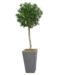 Artificial Bay Tree - housewarming gifts