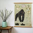 Vintage Gorilla Chart