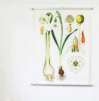Vintage Snow Drop School Chart
