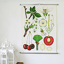 Thumb_vintage-chart-cherry-tree
