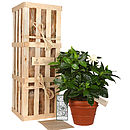 Thumb_40_the_gardenia_crate
