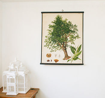Vintage School Chart Chestnut Tree