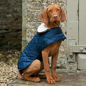 Navy Quilted Dog Coat