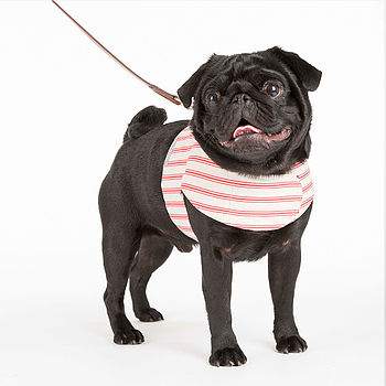 Ticking Stripe Dog Harness