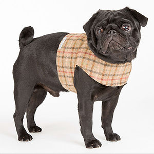 Soft Tweed Dog Harness - dogs