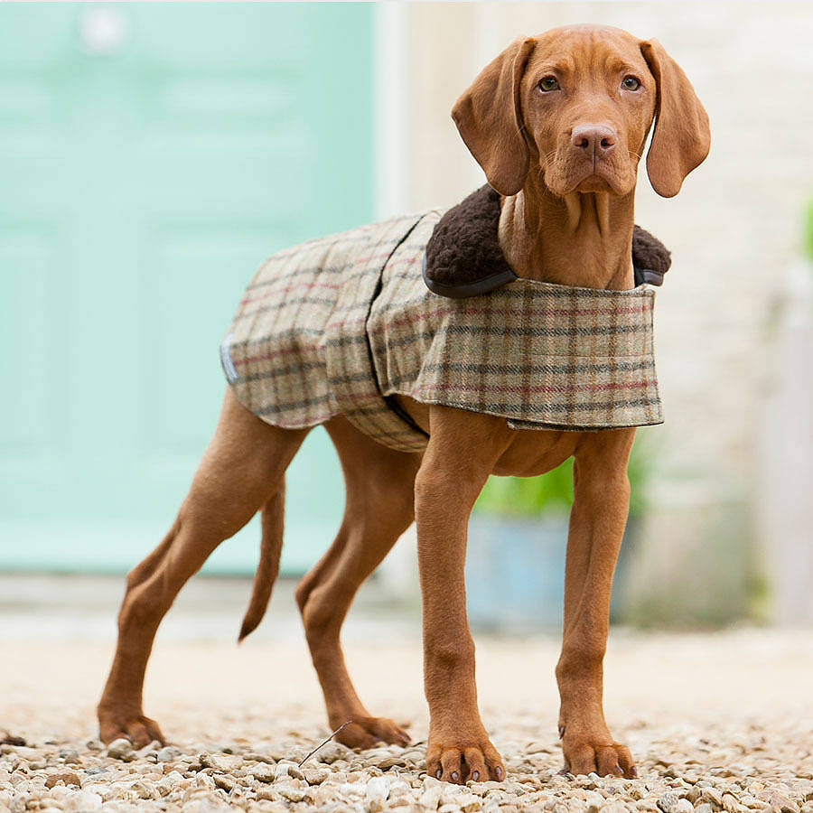 luxury tweed dog coat by mutts & hounds | notonthehighstreet.com
