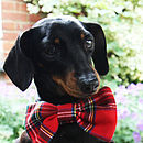 Dapper Dog Bow Tie