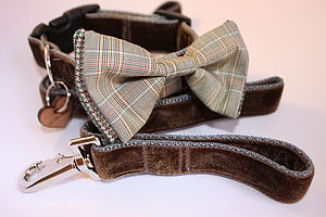 Scrufts Astaire Bow Tie Dog Collar And Lead - pet leads & harnesses