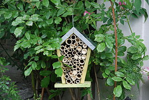 Bee House - birds & wildlife