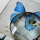 Blue Butterfly Magnified