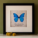 Blue Butterfly on Black Frame
