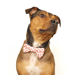 Checkerboard Dog Bow Tie - dogs