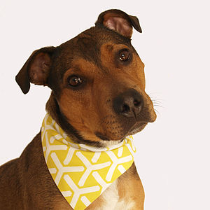Twirl Geometric Dog Bandana