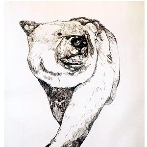 Bear Drawing - contemporary art