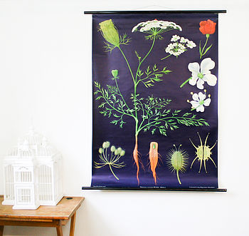 Vintage Pull Down Chart 'Wild Carrot'