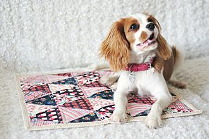 Handmade Quilted Gypsy Pet Blanket - gifts for pets