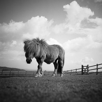 Billy, Black And White Signed Art Print