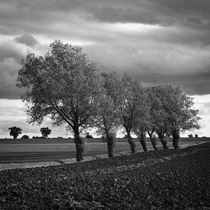 Walsham Le Willows, Black And White Signed Art Print - nature & landscape