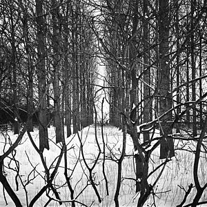 Treeline, Beccles, Black And White Signed Art Print