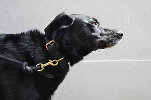Sailing Rope Dog Lead - gifts for your pet
