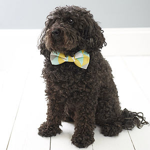 Pastel Point Dog Bow Tie