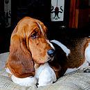 Huntingtower Sand Tweed Cushion Dog Bed