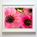 Lovely Pink Flowers. Print, Poster Or Canvas