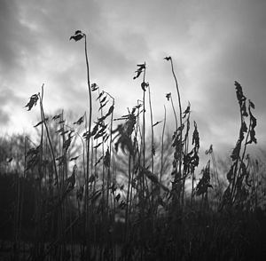 Winter Decay, Black And White Signed Art Print - nature & landscape