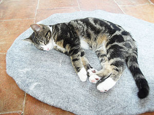 Cat Mat Bed - beds & sleeping