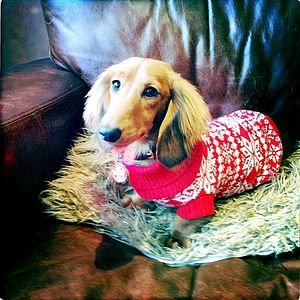 Traditional Nordic Fairisle Knitted Festive Dog Jumper - dogs
