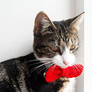 Cat Bow Tie Red