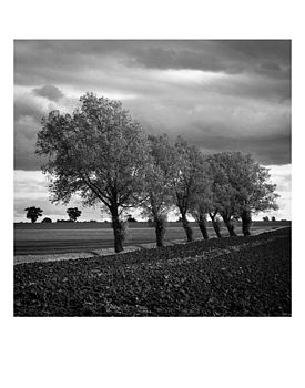 Walsham Willows, Ltd Edition Original Print