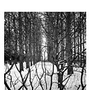 Treeline, Ltd Edition Original Print
