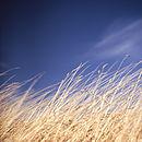 Wild Grasses, Suffolk, Signed Art Print
