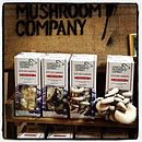 Grow you own kits at different stages of mushroom size