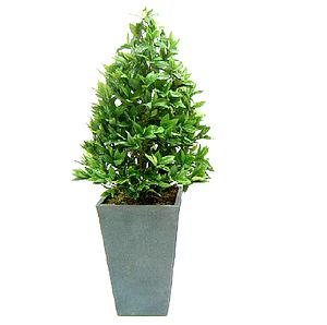 Artificial Bay Cone Topiary Tree