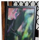 Jay print in frame