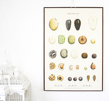 Vintage Botanical Seed Chart, Table Three